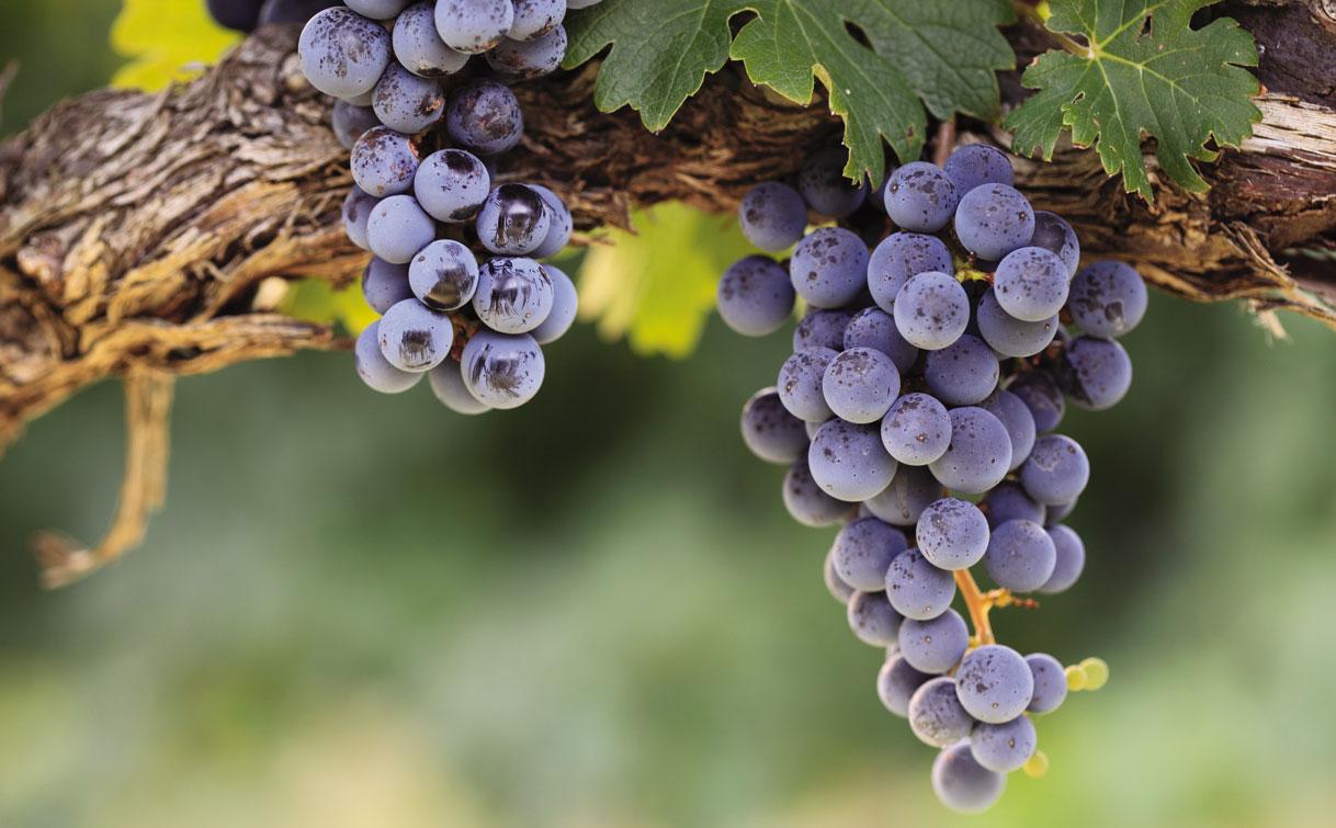 application_wine